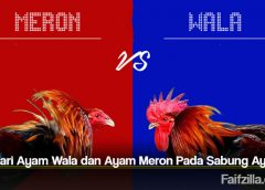 Arti Dari Ayam Wala dan Ayam Meron Pada Sabung Ayam