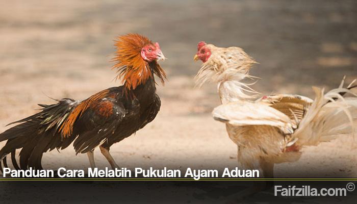 Panduan Cara Melatih Pukulan Ayam Aduan