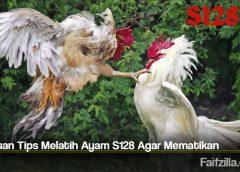 Panduan Tips Melatih Ayam S128 Agar Mematikan