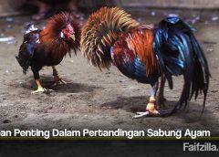 Tahapan Penting Dalam Pertandingan Sabung Ayam